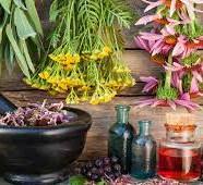 Viszlát ráncok! Vadnövények, nyers ételek a bőrön – szépségsuli az Élni jó házban